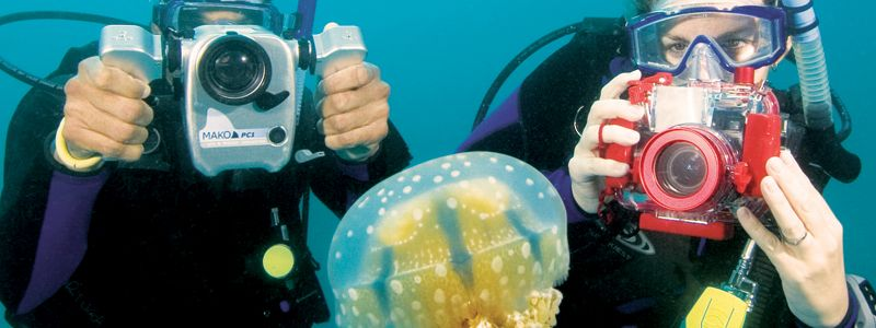 divers with jellyfish